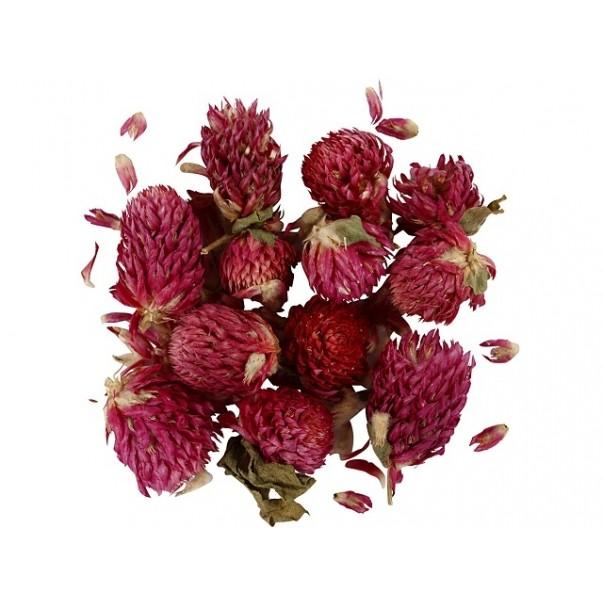Posušene rože, cvetovi rdeče detelje