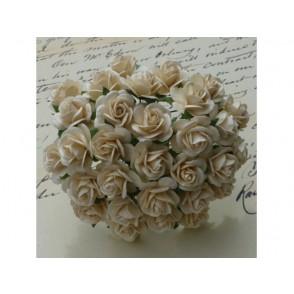 Odprte vrtnice, barva slonovine temna