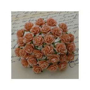 Odprte vrtnice, barva breskve