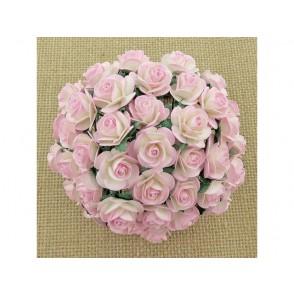 Odprte vrtnice, baby roza krem