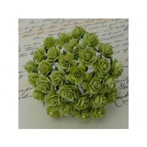 Odprte vrtnice, svetlo limeta zelena