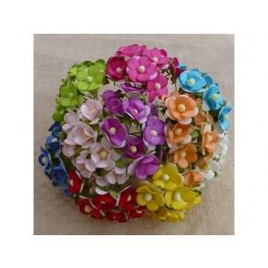 Srčkasti cvetovi, mix barve