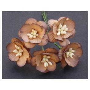Češnjevi cvetovi, čokoladno rjavi