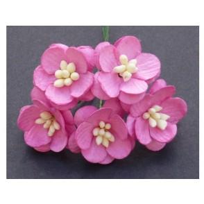 Češnjevi cvetovi, roza