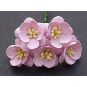 Češnjevi cvetovi, baby roza