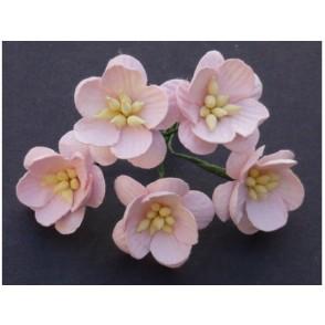 Češnjevi cvetovi, svetlo roza