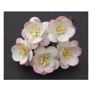 Češnjevi cvetovi, krem/roza