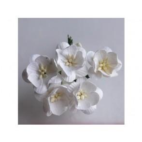 Češnjevi cvetovi, beli