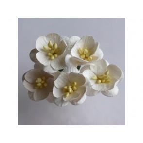 Češnjevi cvetovi, krem