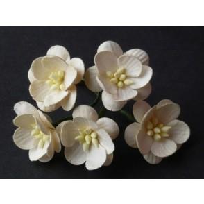 Češnjevi cvetovi, temno krem