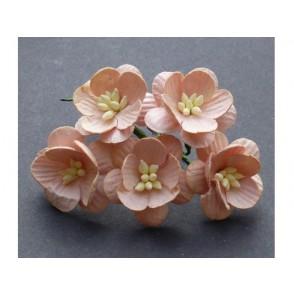 Češnjevi cvetovi, barva breskve