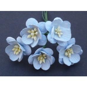Češnjevi cvetovi, baby modra