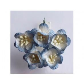 Češnjevi cvetovi, starinsko modri