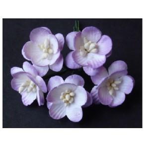 Češnjevi cvetovi, lila dvobarvni