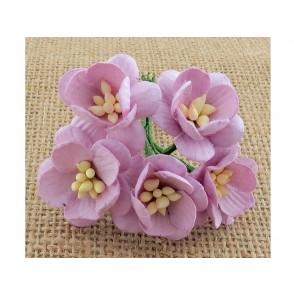 Češnjevi cvetovi, lila