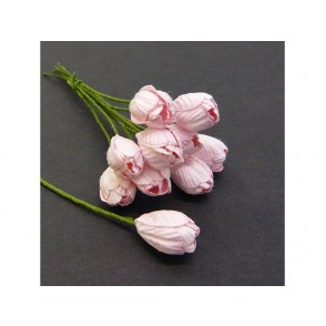 Tulipani, roza