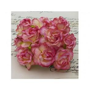 Divje vrtnice, roza-barva šampanjca
