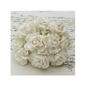 Divje vrtnice, krem