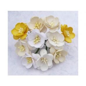 Češnjevi cvetovi, mix beli/krem