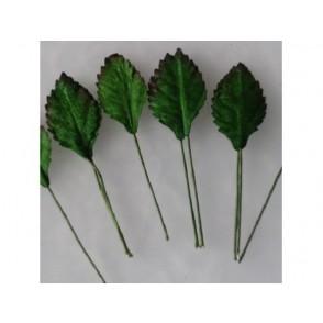 Papirnato listje vrtnice, zeleno