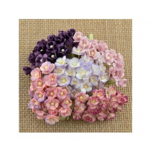 Srčkasti cvetovi, mini, vijola mix