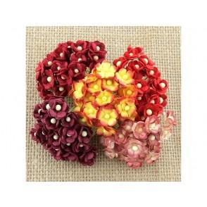 Srčkasti cvetovi, mini, rdeči mix